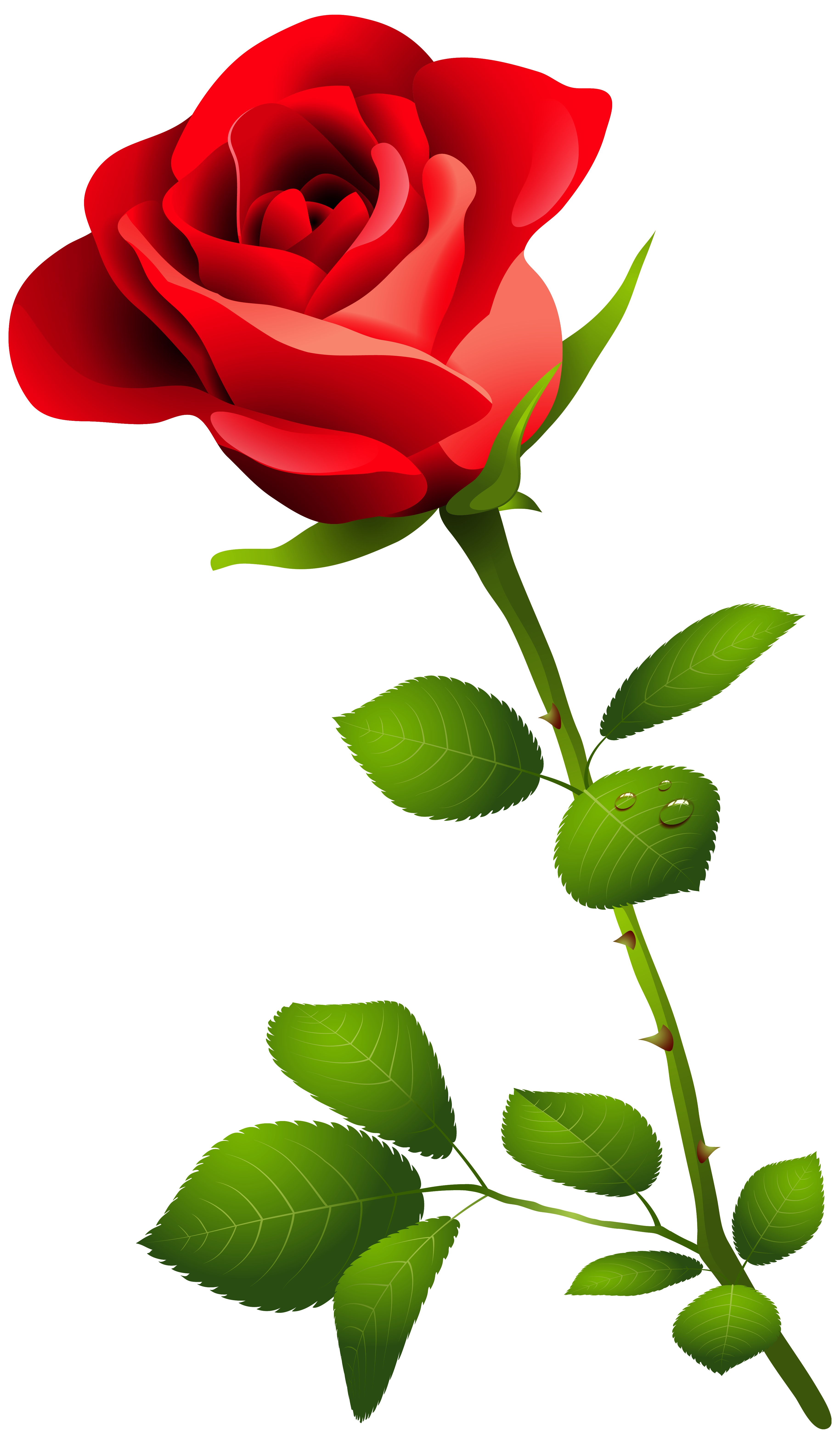 Nectar clipart red rose Clipart With Image Rose Image