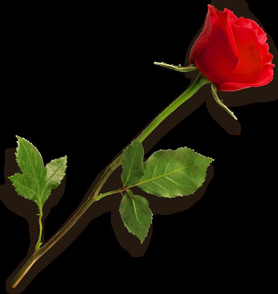 Red Flower clipart long #9