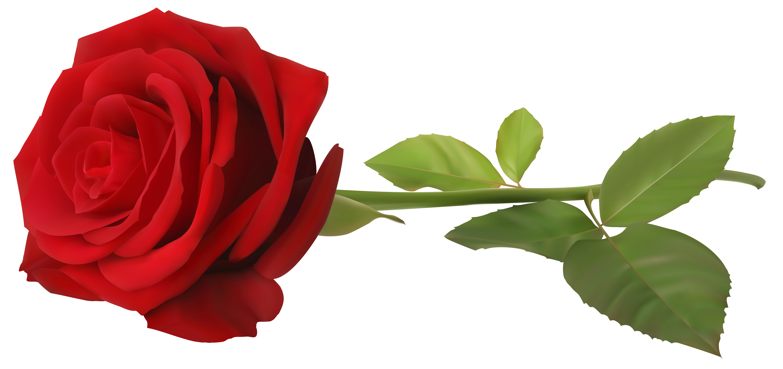 Petal clipart rose stem Art Transparent  Gallery Image