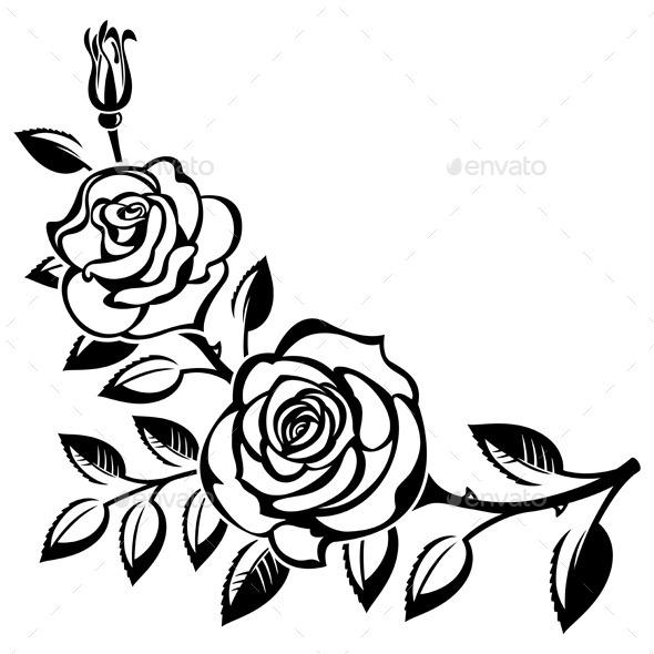 Drawn rose bush rose blossom Roses cut of of Roses