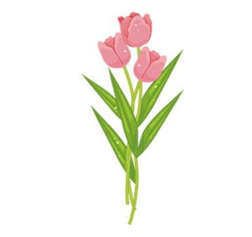 Pink Flower clipart pink tulip On about Pinterest Tulip 118