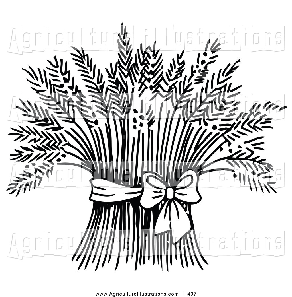 Straw clipart wheat bundle Black Tied a Stock Ribbon