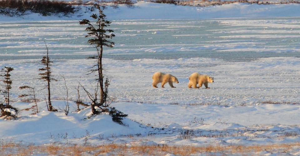 Sream clipart arctic tundra Polar image tundra 3 ecosystem