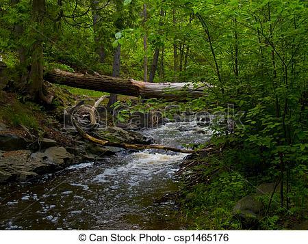 Sream clipart brook A Forest Forest Under Brook