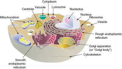 Structure clipart contents But has have of The