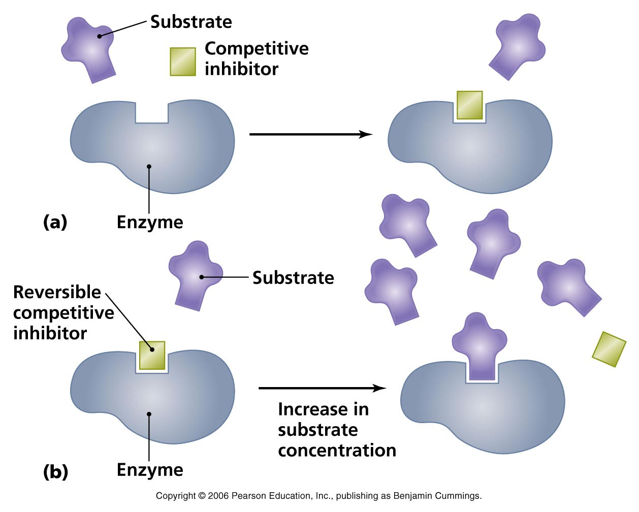 Structure clipart group activity When competes by can enzymes
