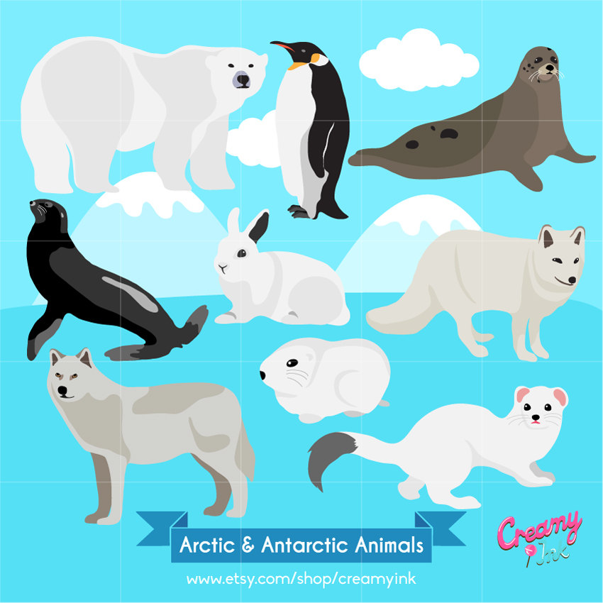 Arctic clipart rabbit / Antarctic Digital Penguin Animals