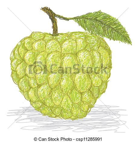 Sugar Apple clipart Art illustration Custard of Images