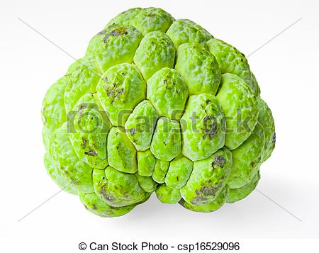 Sugar Apple clipart Art squamosa 155 Custard clip