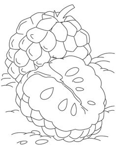 Sugar Apple clipart / pages apple Download Nona