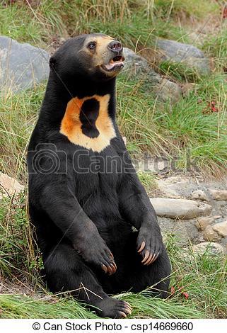 Sun Bear clipart Image csp14669660 Sitting the Bear
