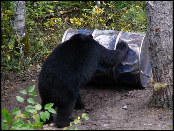 Black Bear clipart bear hunt Bear on Tips hunting 25+