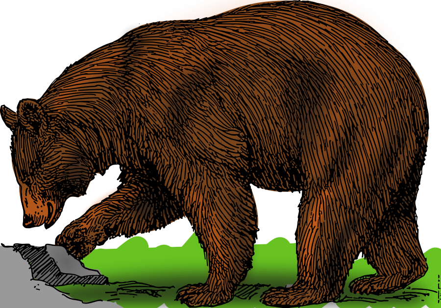 Grizzly Bear clipart outline #12