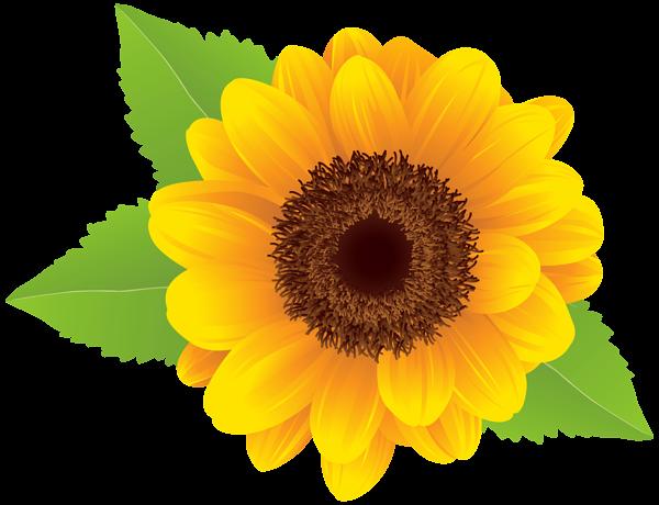 Sunflower clipart Image 3 Sunflower com art