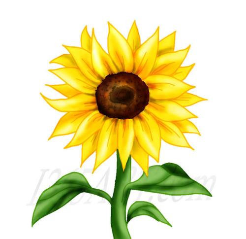 Sunflower clipart Clipart Sunflower Clipartion com Sunflower