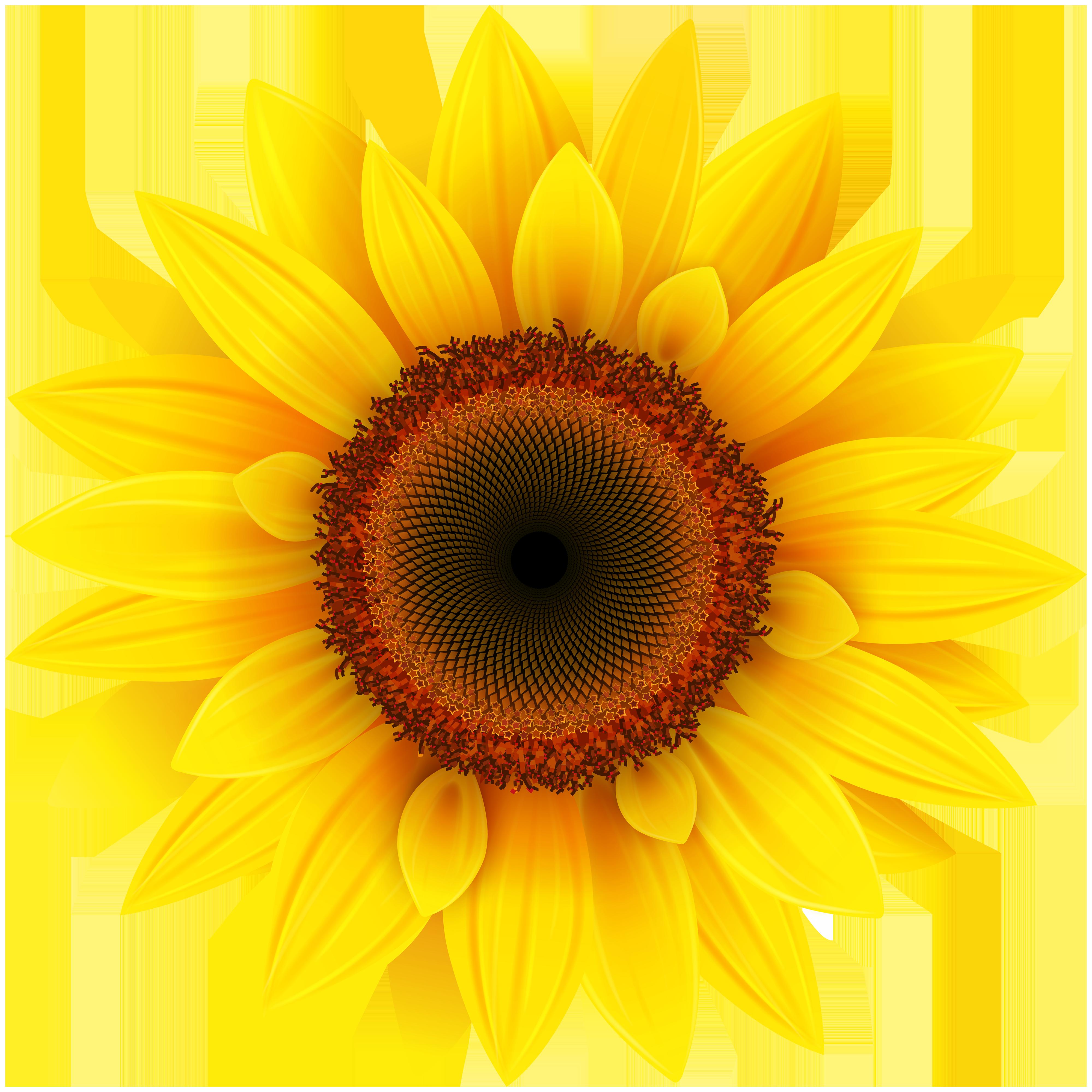 Sunflower clipart Sunflower com Sunflower Gclipart Clipart