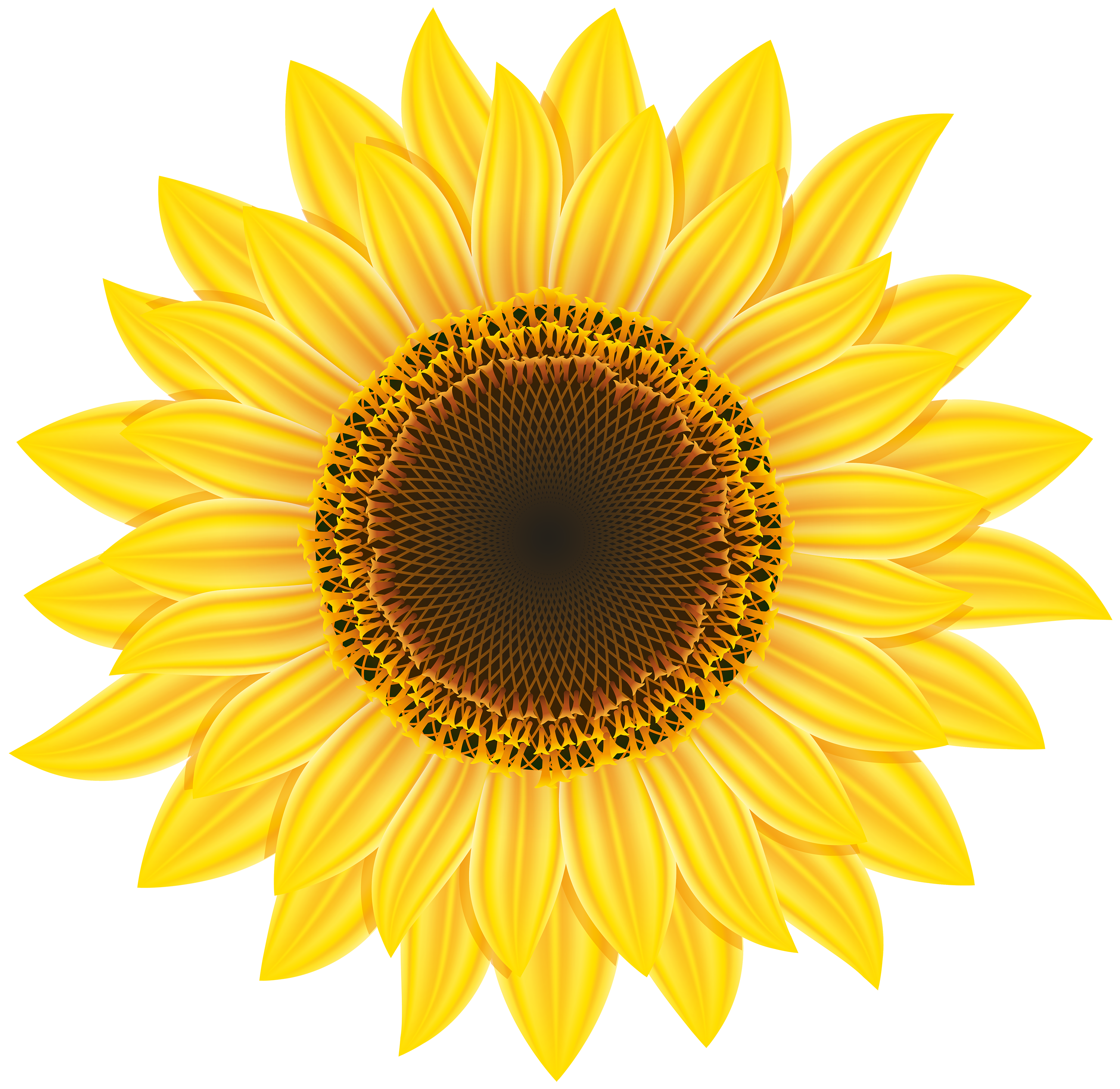 Sunflower clipart Sunflower Sunflower Sunflower Images &