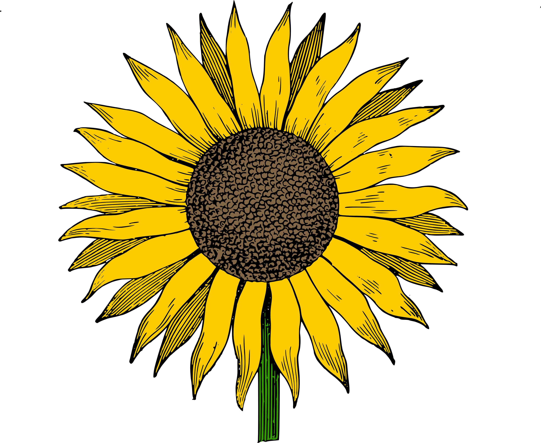 Sunflower clipart Free Cliparting Sunflower Art Sunflower