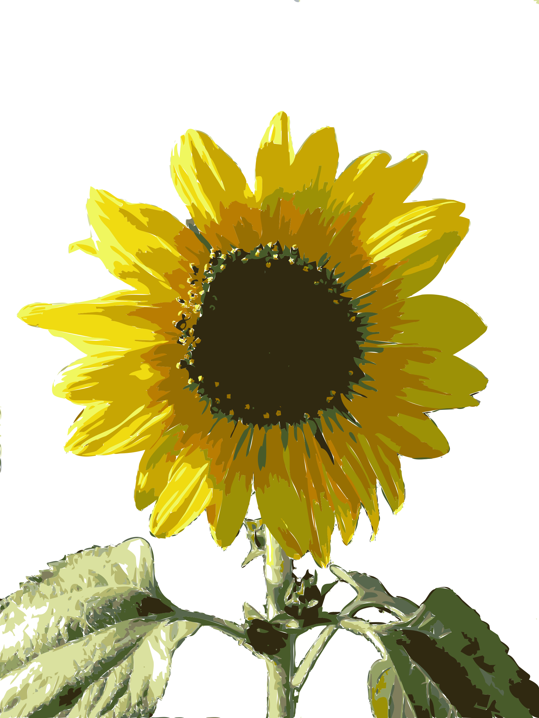 Sunflower clipart wallpaper Girasol Girasol Clipart