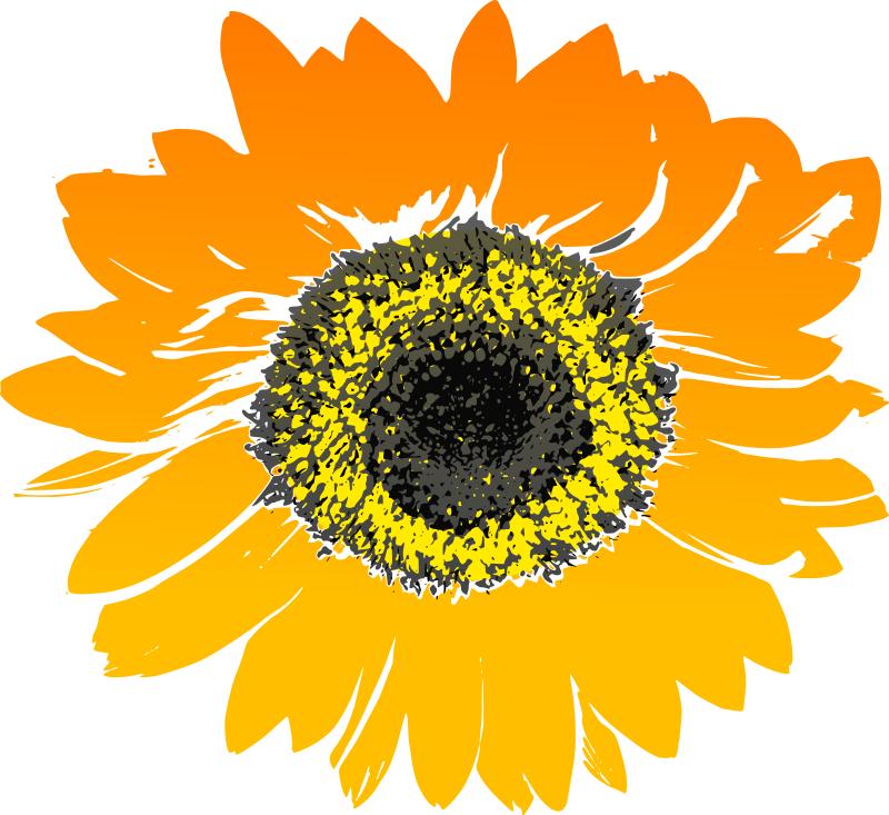 Yellow Flower clipart sunflower Png218 Sunflower3_Flower_Clipart Flower Clipart Clipart