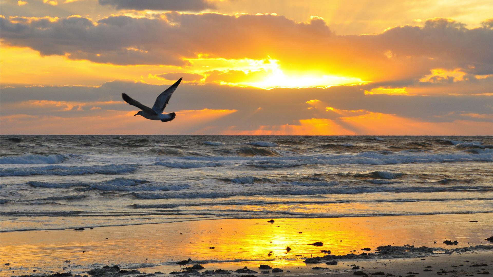 Caribbean clipart sunrise beach Clipart  Beach Beach Clipart