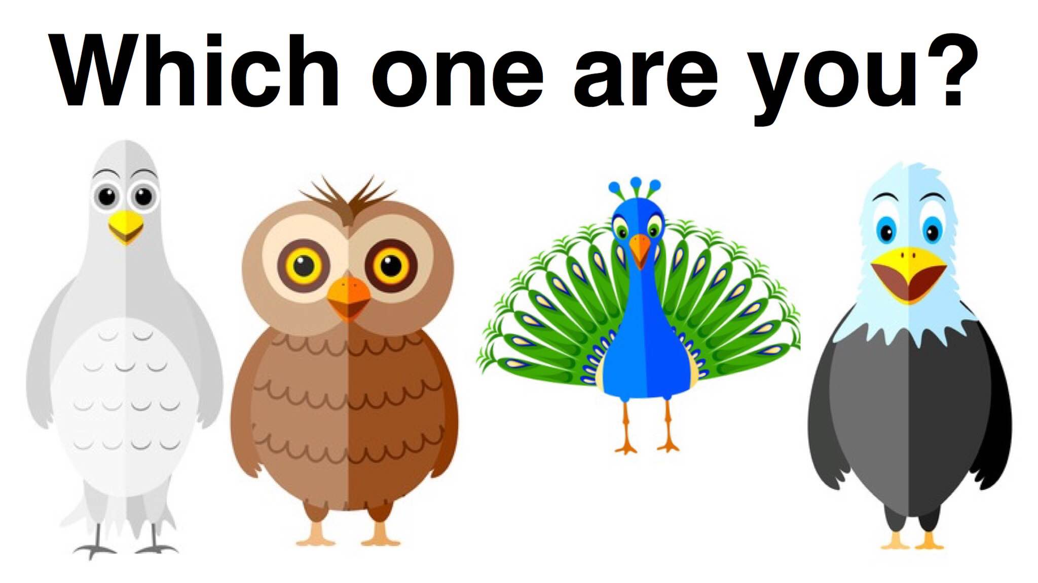 Supporters clipart outgoing personality Type Bird  Personality You?