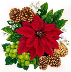 Poinsettia clipart yule This Pin on pine and