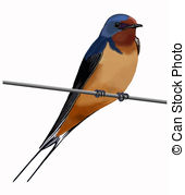 Swallow clipart Wire and Stock rustica) 880