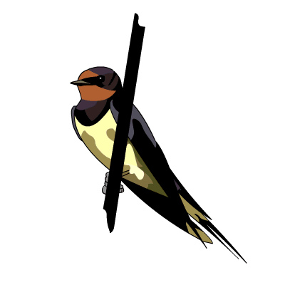 Swallow clipart Download Swallow clipart drawings Barn