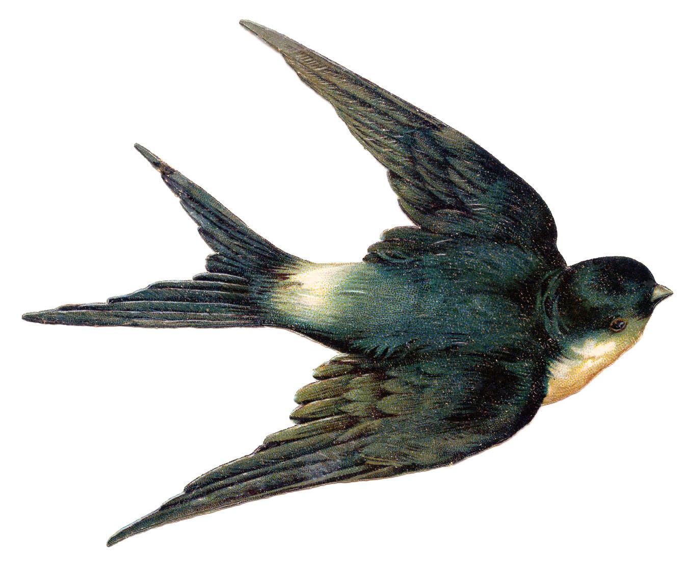 Swallow clipart Bird Art Ever! Swallow Fairy