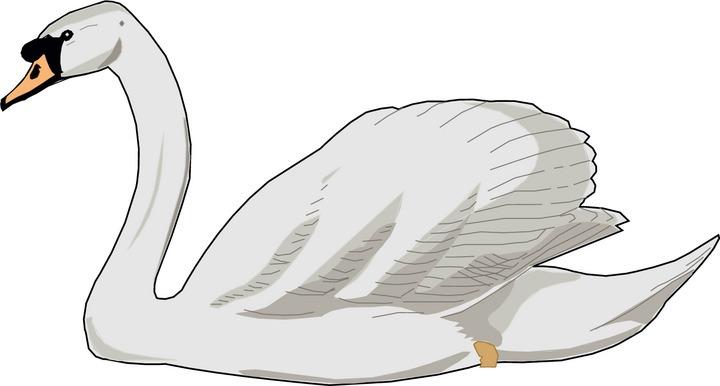 Swan clipart Cliparts clipart Swan Black swan