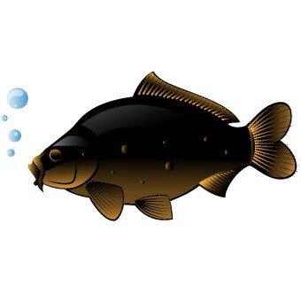 Swordfish clipart xiphias Swordfish clipart Clipart #15488 #172