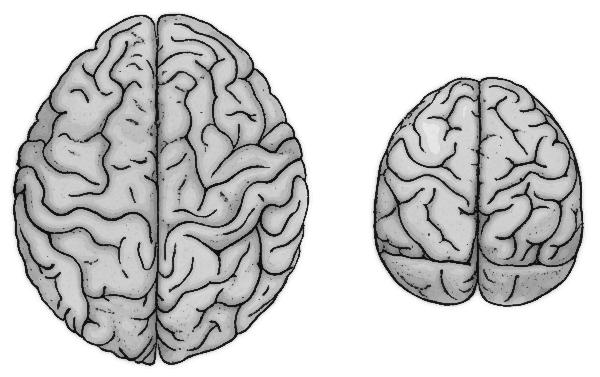Brains clipart human brain #8