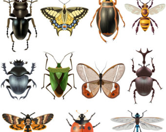 Beetles clipart arthropod Digital Etsy Image clipart Butterfly