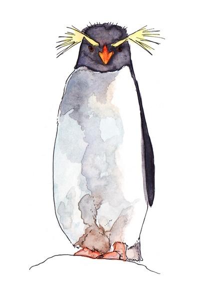 Symmetry clipart rockhopper penguin 20+ Best Pinterest Penguin drawing