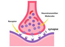 Synapse clipart Science Kb nerve Clip Pictures