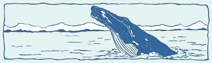 Humpback Whale clipart humback Humpback  Whales