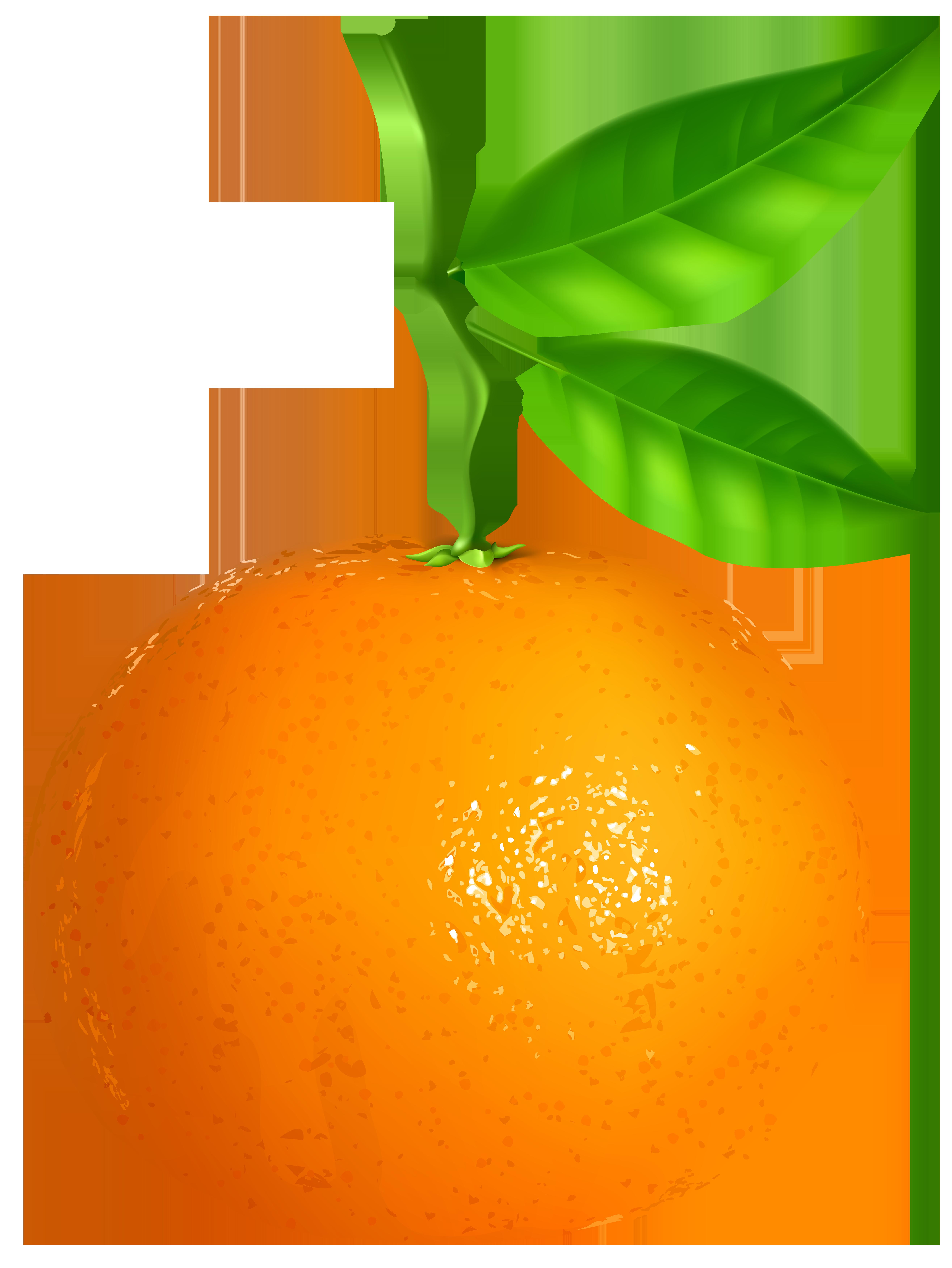 Tangerine clipart Tangerine Image Transparent Art Yopriceville