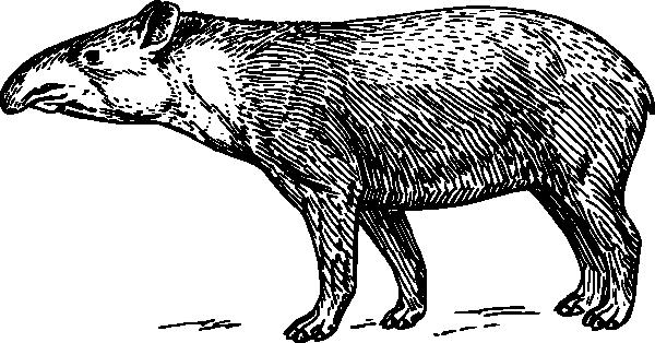 Tapir clipart Art Download  art vector