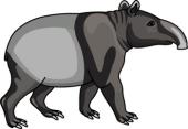 Tapir clipart Mammal Tapir  for Search