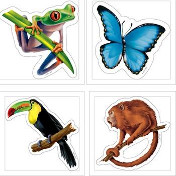 Toucanet clipart rainforest butterfly #15