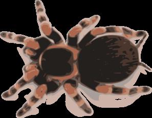 Tarantula clipart Art Art Clip Tarantula Tarantula