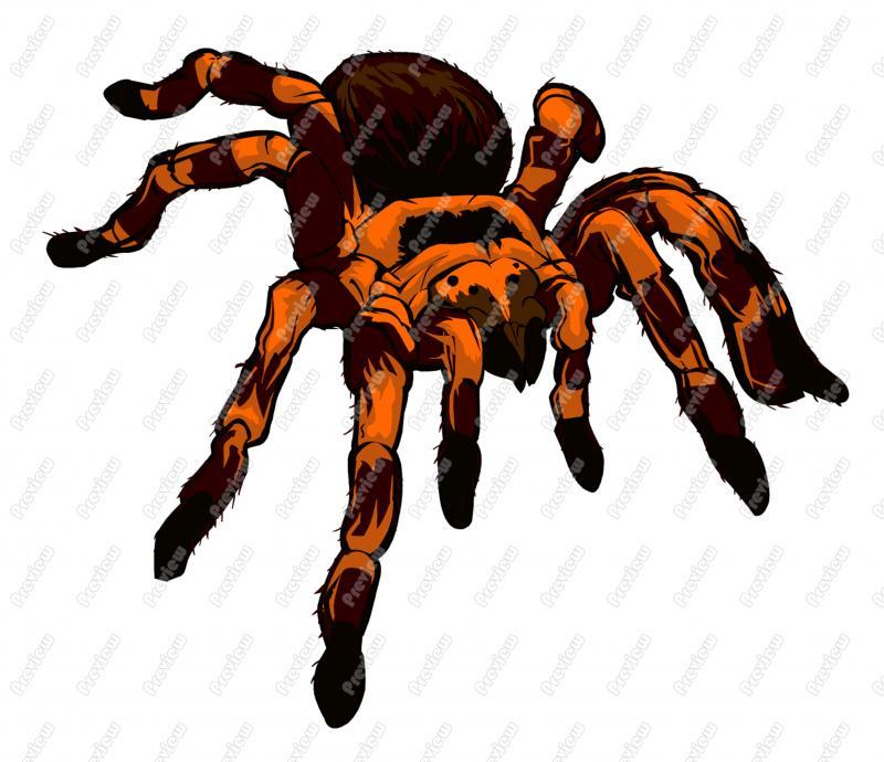 Tarantula clipart Vector Clip Tarantula Art Tarantula