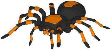 Tarantula clipart #2 drawings Download Tarantula clipart