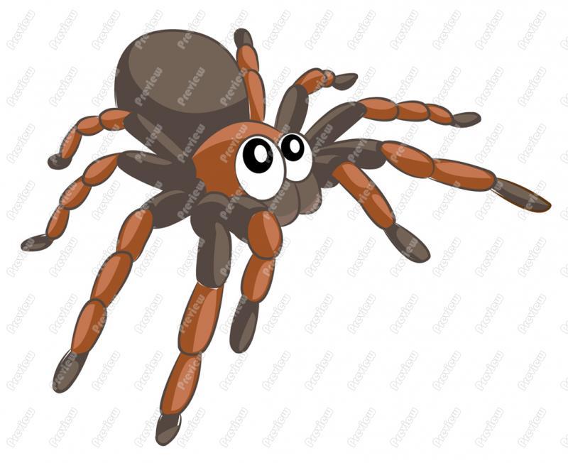 Tarantula clipart Clip Royalty Art Tarantula Character
