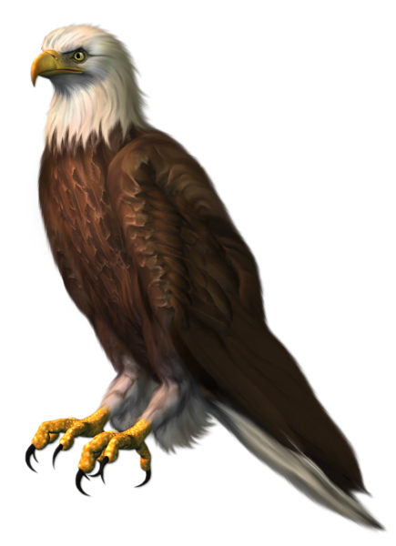 Tawny Eagle clipart Pinterest free birds images Parrot
