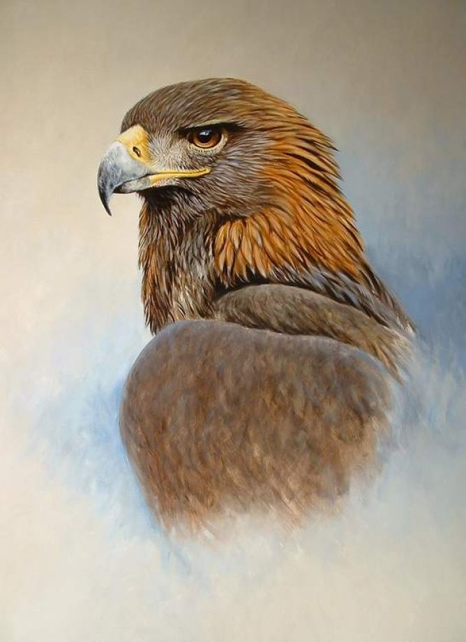 Drawn steller's sea eagle eagle eye GOLDEN ideas EAGLE Eagle 25+