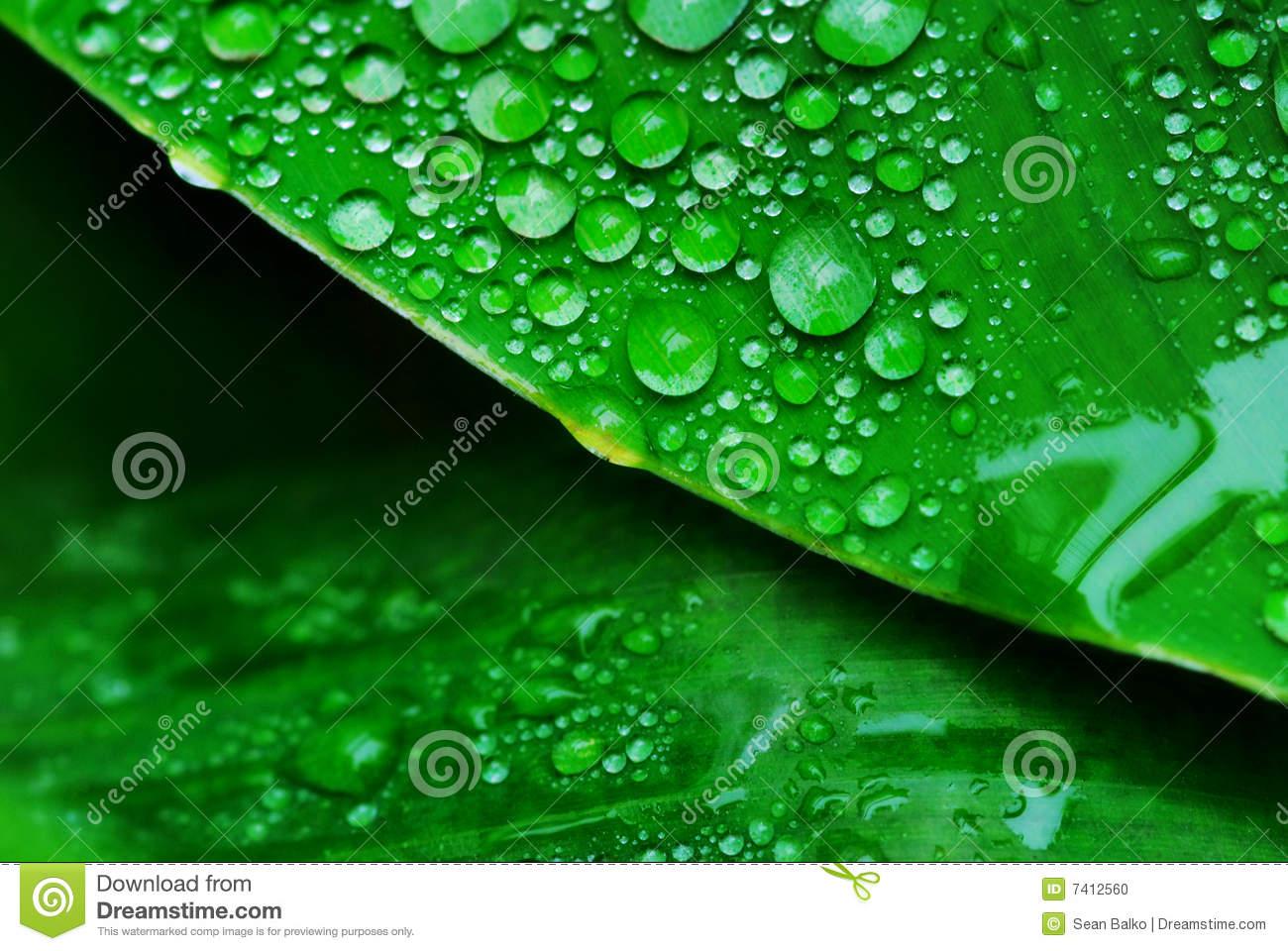 Waterdrop clipart moisture Clipart Moist Moist drawings clipart