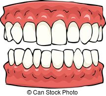 Teeth clipart White  and False Illustrations