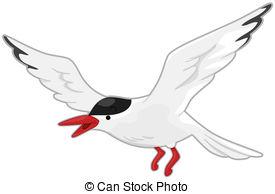 Tern clipart #1